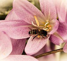 Autumn Buzz by angelimagine