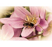 Autumn Buzz Photographic Print