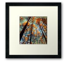 Beautiful yellow forest Framed Print