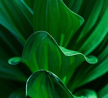 Layers of Green by Chee Sim