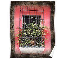 Deep Pink Stucco Gated Window Poster
