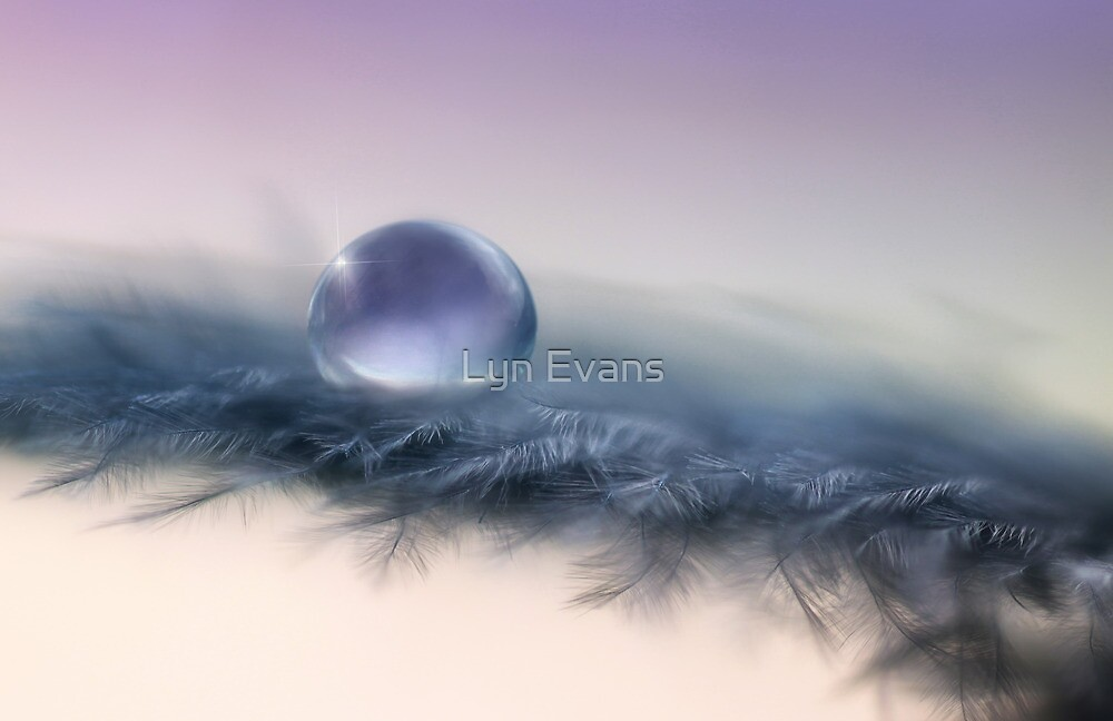 Soft as a feather by Lyn Evans