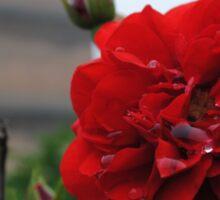 Big Wild Goose Pagoda Rose II Sticker