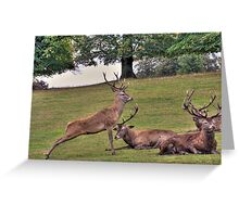Stags Wollaton Park Greeting Card