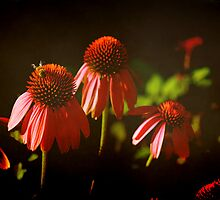 Coneflowers and a Bee by Lisa Holmgreen