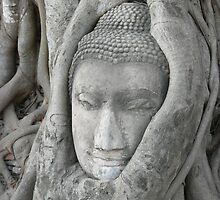 Buddha head caught in a bodhi tree by jmccabephoto