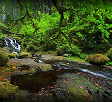 McCord Creek II by Tula Top