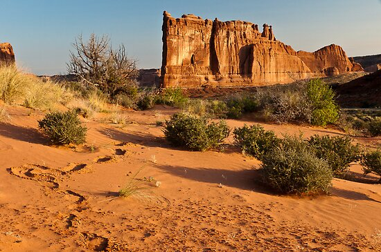Foot Steps At Arches by Gregory J Summers