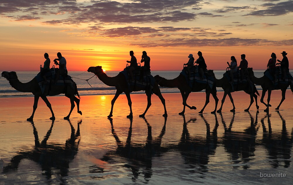 ''Camels at Sunset'' by bowenite