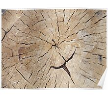 Top view close up on an old tree stump Poster