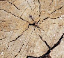 Top view close up on an old tree stump Sticker