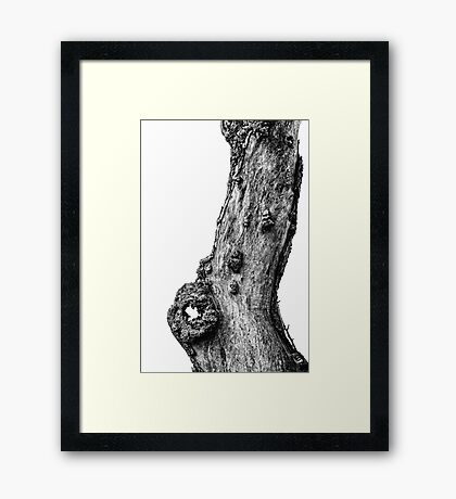 Apple Tree Trunk Framed Print