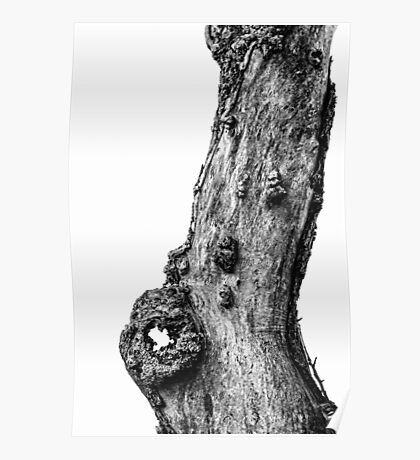 Apple Tree Trunk Poster