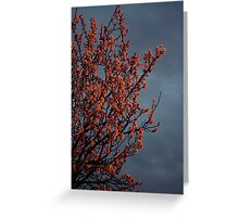 Almond Blossom and Storm Clouds Greeting Card