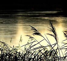 Reeds at Sunset - Virgina Water, Surrey by Will Goodwin