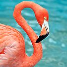 Pink Flamingo. by FER737NG