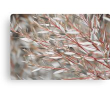 Lost in the Shrubs Canvas Print