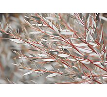 Lost in the Shrubs Photographic Print