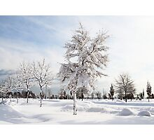 Hugged by snow (colour) Photographic Print