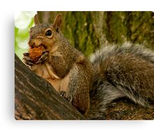 Squirrel Dinner - Don't mess with me while I'm eating... Canvas Print