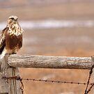 Prairie Hawk (2) by JamesA1