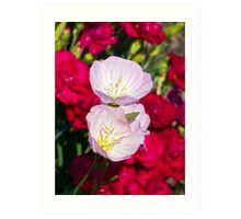 Musk Mallow Flowers backed by Carnations Art Print