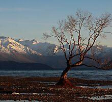 Wanaka Sunrise by Jenni Tanner