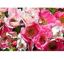 Profusion of Pink Flowers  Photographic Print