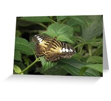 dull butterfly  Greeting Card
