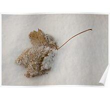 Frozen Leaf, Otley Chevin Poster