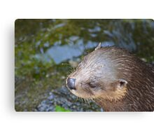 Playful Otter Canvas Print