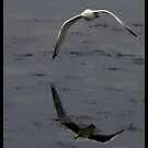 the flight of the sea gull  by jean-jean