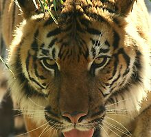 Tuan the Magnificent by Denzil