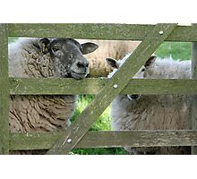 Who are you looking at? Photographic Print