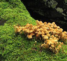Fungi and moss by Jane Corey