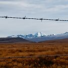 Rabbit Fence by Stephen Dickson