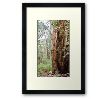 Strong Timber Framed Print