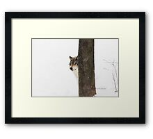 Hide and Seek! - Timber Wolf Framed Print