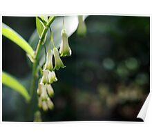 soft white bells Poster
