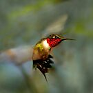 Ruby-throated Hummingbirds by Janice Carter