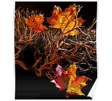 Autumnal feelings Poster