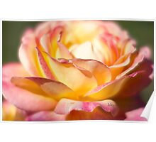Rest in piece my friend - All Proceeds to Canadian Breast Cancer Foundation - Peace Roses Poster