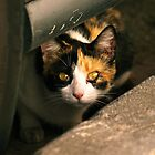 Cat under a car by DavidCucalon