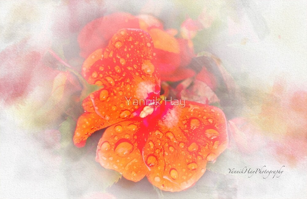 Rain Shower on New Guinea Impatiens by Yannik Hay