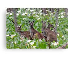 Kangaroos in the Tuart Forest Metal Print