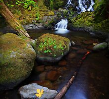 McCord Creek III by Tula Top