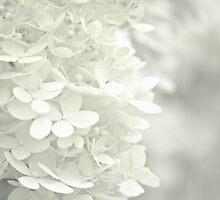 White Satin by Kelly Chiara