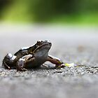 Frog in the Road by Nicholas Jermy