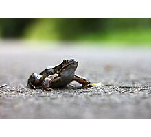 Frog in the Road Photographic Print