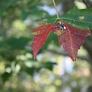 R3 - Red Leaf by meadowmuffin